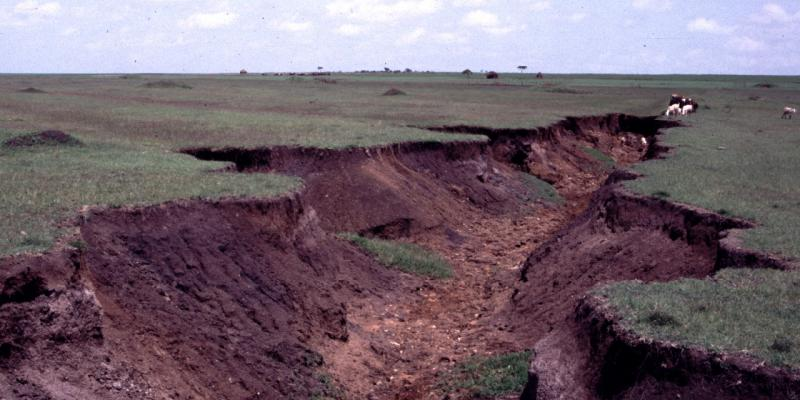 Water erosion causing gullies in the landscape