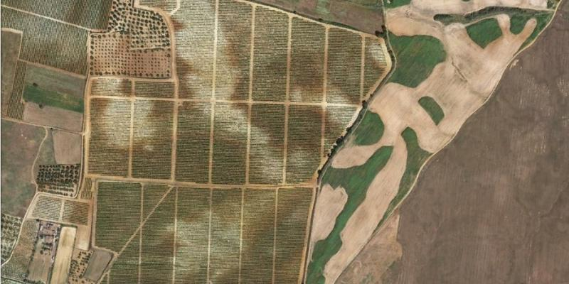 Soil variation within fields in Andalucia, Spain (Rociana del Condado). Source: Google Earth.