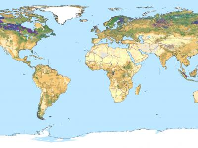 Our entry point for specialists looking for global soil information